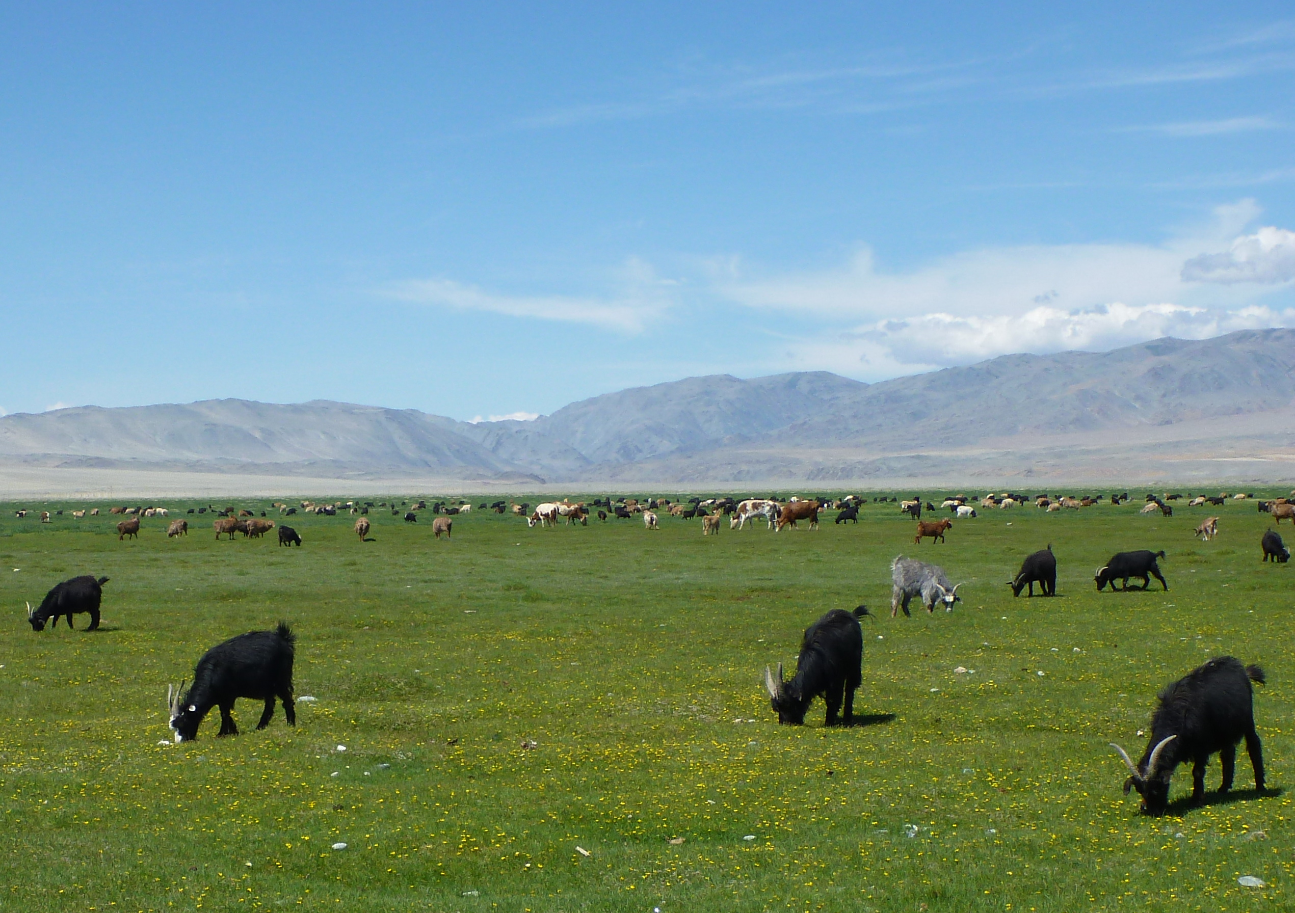 Horse Trek In Mongolia Part One A Life Of Adventure