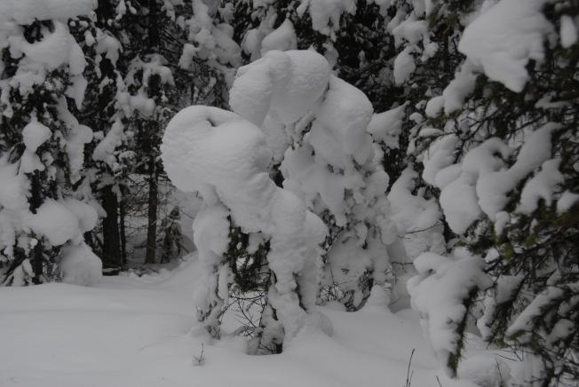 Nature's snowman