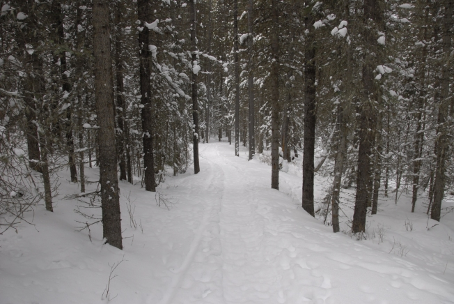 One of many trails near the lodge.