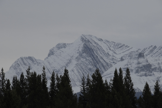 The tilted and folded strata of the Front Ranges of the Canadian Rockies.
