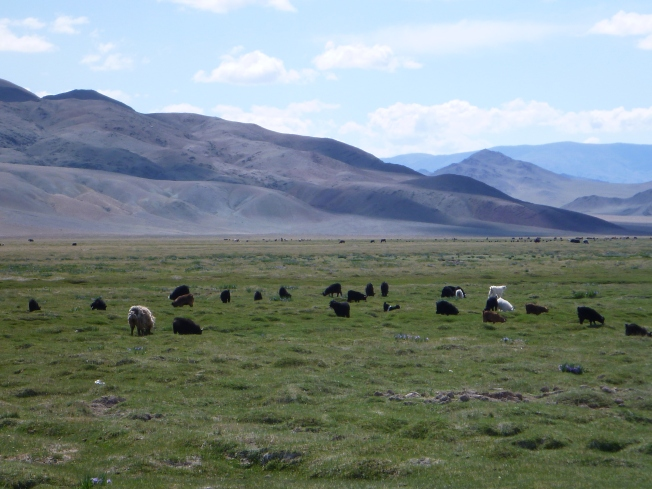 Sheep and goats graze peacefully against a backdrop of purple mountains.