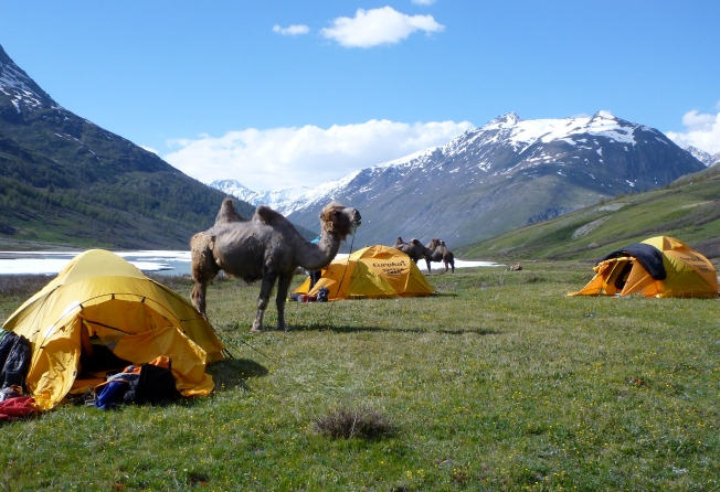 Camping with camels