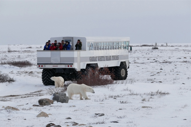 A mother and cub inspect a Polar Rover.